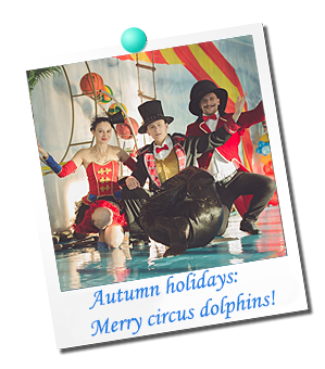 Autumn holidays: Merry circus dolphins!